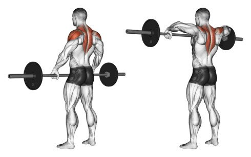 Upright Barbell Rows