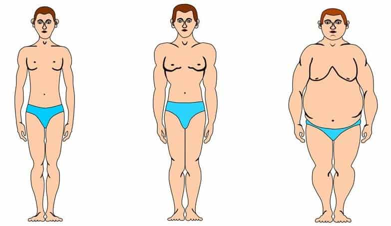 Body Fat Percentage Using Height and Weight