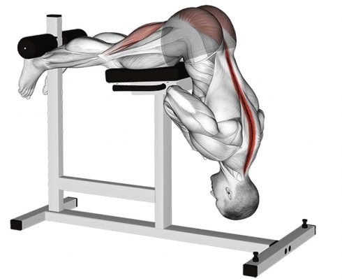 Back Workout Hyperextensions