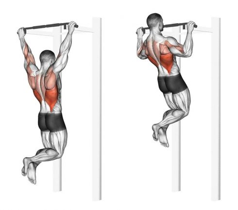 Pull Ups Home Back Workout