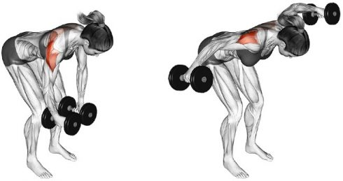 Bent Over Dumbbell Side Raises