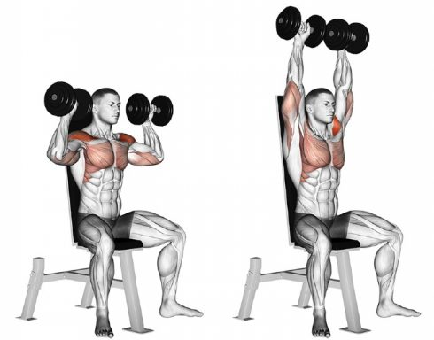 Shoulder Workout at Home With Dumbbells