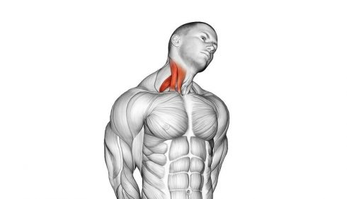 Lateral Neck Stretch